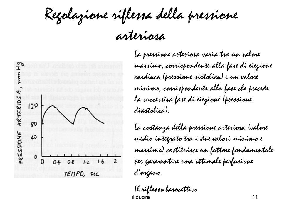 il cuore11 Regolazione riflessa della pressione arteriosa La pressione arteriosa varia tra un valore massimo, corrispondente alla fase di eiezione car