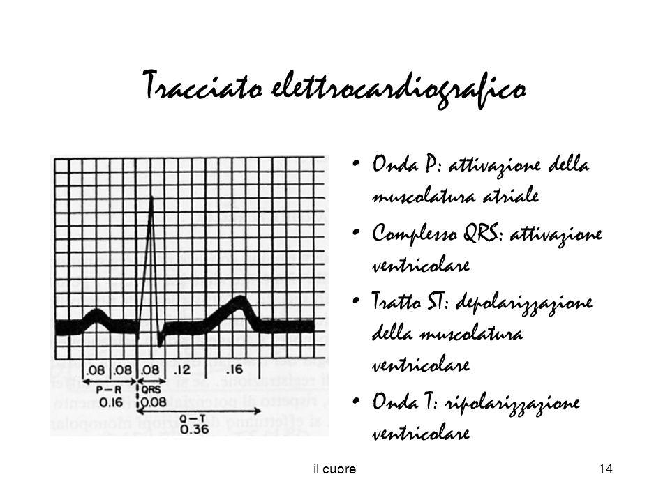il cuore14 Tracciato elettrocardiografico Onda P: attivazione della muscolatura atriale Complesso QRS: attivazione ventricolare Tratto ST: depolarizza