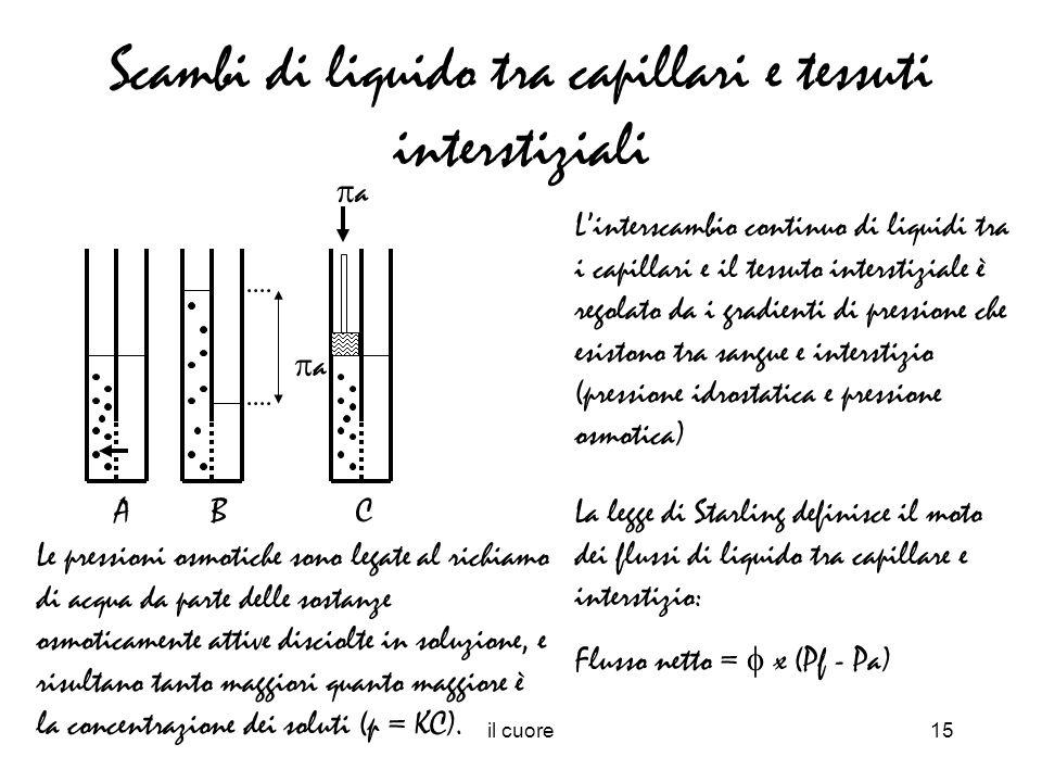 il cuore15 Scambi di liquido tra capillari e tessuti interstiziali Linterscambio continuo di liquidi tra i capillari e il tessuto interstiziale è rego