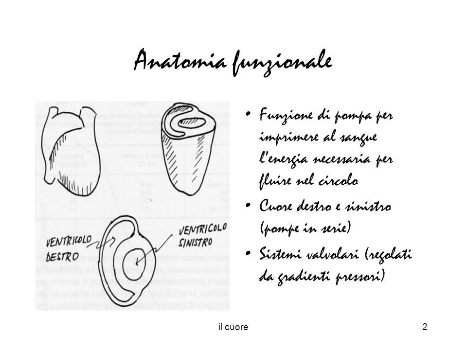 il cuore2 Anatomia funzionale Funzione di pompa per imprimere al sangue lenergia necessaria per fluire nel circolo Cuore destro e sinistro (pompe in s