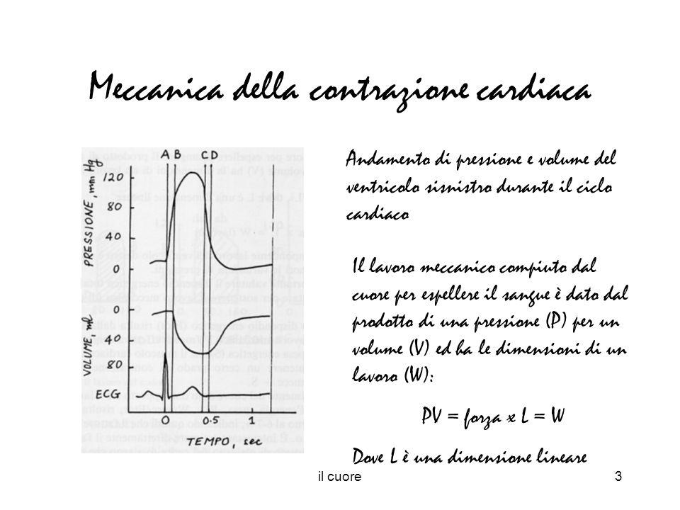 il cuore4 Rendimento meccanico e dispendio energetico Il dispendio energetico (Etot) del muscolo cardiaco risulta dalla somma del lavoro meccanico (Wmecc) effettivamente sostenuto dal cuore e la spesa energetica (S) che il muscolo cardiaco deve affrontare per mantenere un certo grado di contrasione: Etot = Wmecc + S Il rendimento del cuore è dato dal rapporto tra il lavoro meccanico svolto e la spesa energetica sostenuta: R = Wmecc/Etot = 6-7%