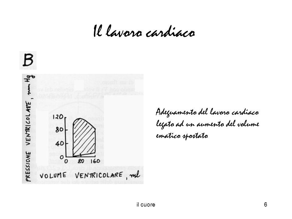il cuore6 Adeguamento del lavoro cardiaco legato ad un aumento del volume ematico spostato Il lavoro cardiaco