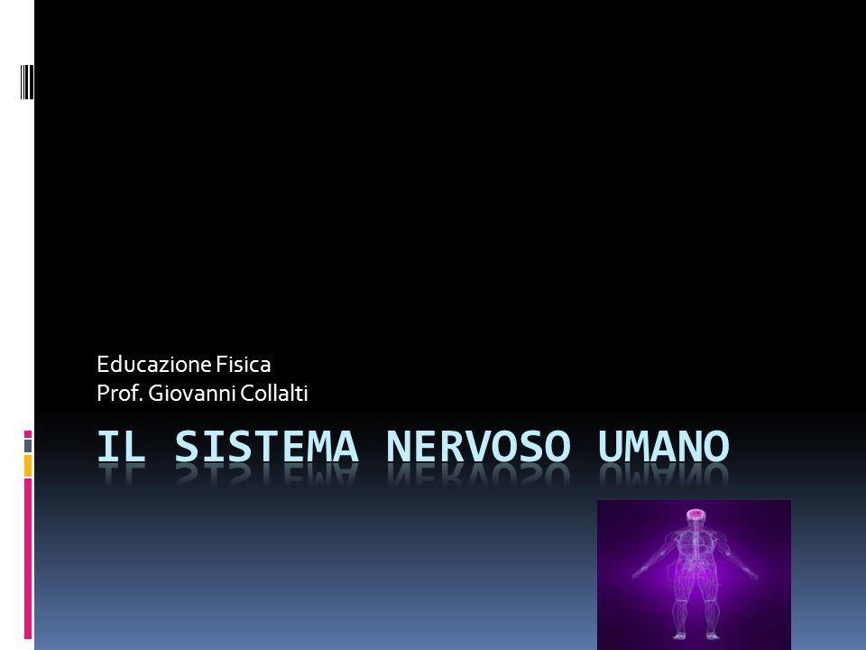Educazione Fisica Prof. Giovanni Collalti