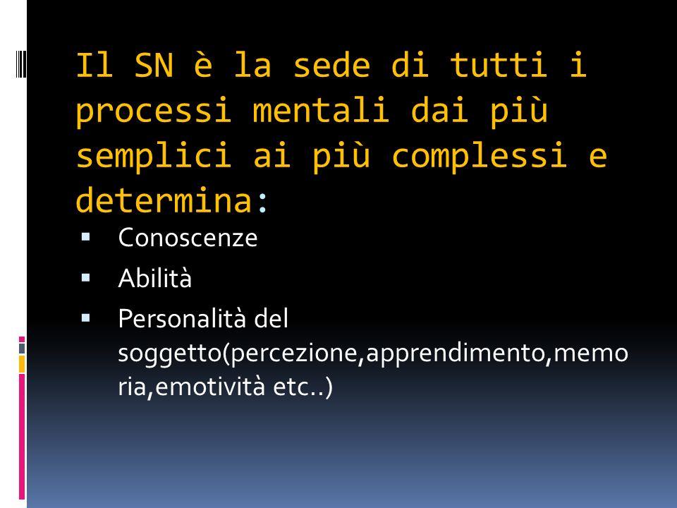 Il SN è la sede di tutti i processi mentali dai più semplici ai più complessi e determina: Conoscenze Abilità Personalità del soggetto(percezione,appr