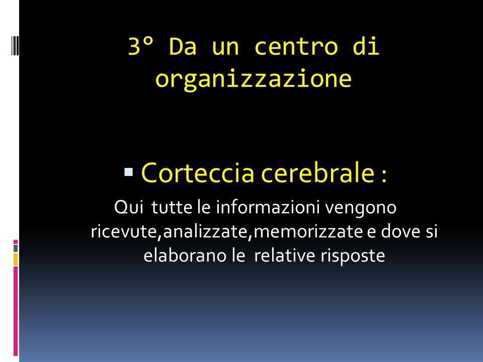 3° Da un centro di organizzazione Corteccia cerebrale : Qui tutte le informazioni vengono ricevute,analizzate,memorizzate e dove si elaborano le relat