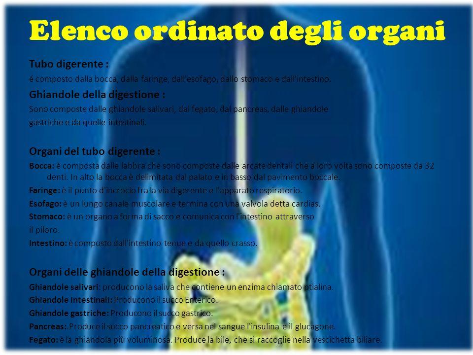 Elenco ordinato degli organi Tubo digerente : é composto dalla bocca, dalla faringe, dall'esofago, dallo stomaco e dall'intestino. Ghiandole della dig