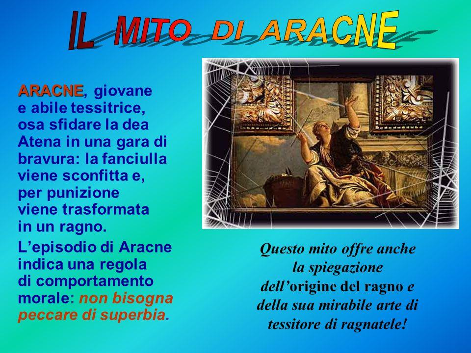 ARACNE, giovane e abile tessitrice, osa sfidare la dea Atena in una gara di bravura: la fanciulla viene sconfitta e, per punizione viene trasformata i