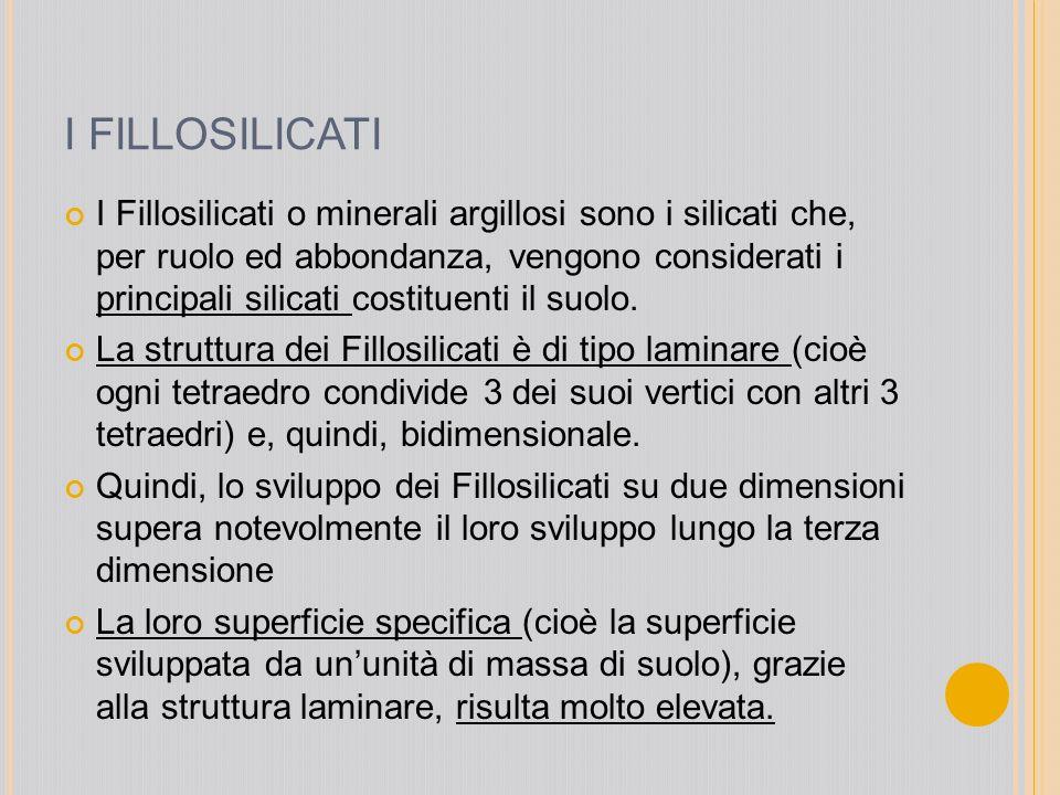 I FILLOSILICATI I Fillosilicati o minerali argillosi sono i silicati che, per ruolo ed abbondanza, vengono considerati i principali silicati costituen