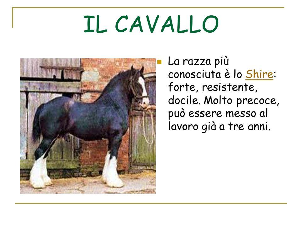 Lalimentazione Il cavallo è un mammifero erbivoro e migratore.