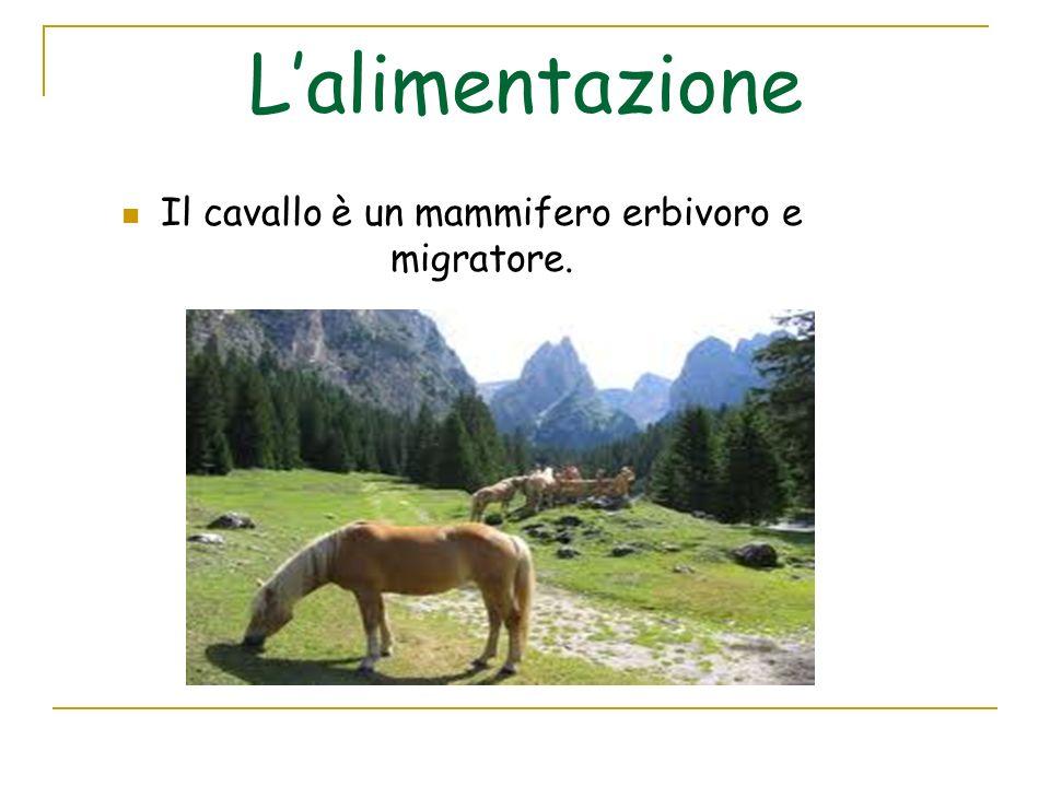 Il cavallo si ciba prevalentemente di: Le graminacee da pascolo più importanti per il cavallo sono: Gramigna, Orzo selvatico, Grano, Frumento.