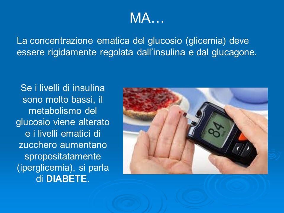 La concentrazione ematica del glucosio (glicemia) deve essere rigidamente regolata dallinsulina e dal glucagone. Se i livelli di insulina sono molto b