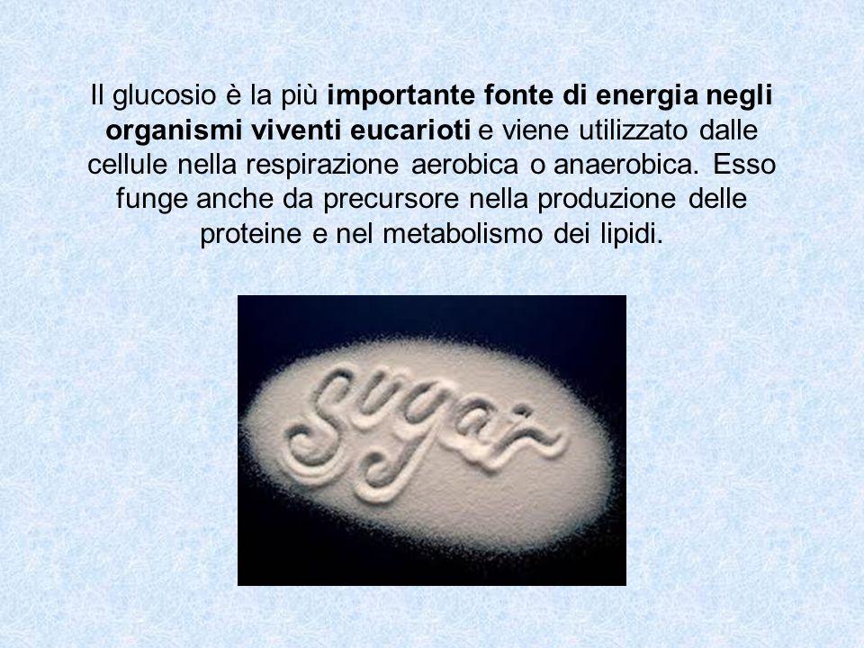Il glucosio è la più importante fonte di energia negli organismi viventi eucarioti e viene utilizzato dalle cellule nella respirazione aerobica o anae