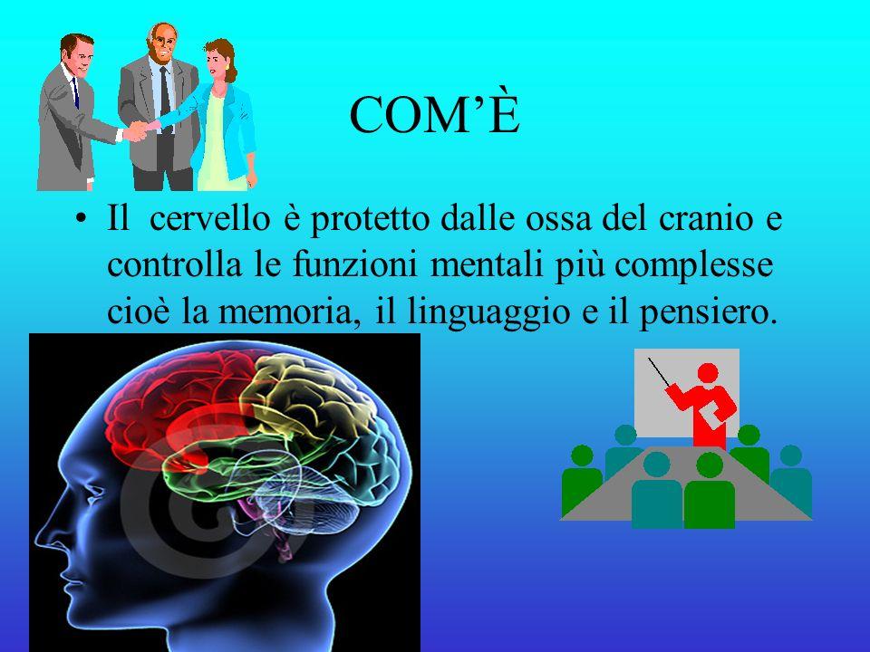COMÈ Il cervello è protetto dalle ossa del cranio e controlla le funzioni mentali più complesse cioè la memoria, il linguaggio e il pensiero.