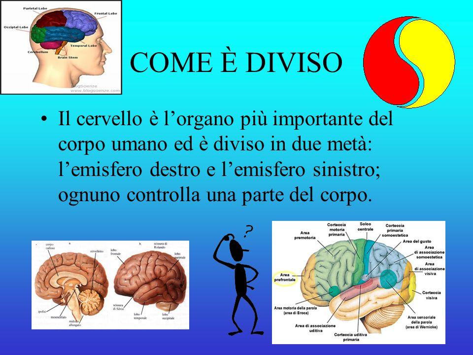 COME È DIVISO Il cervello è lorgano più importante del corpo umano ed è diviso in due metà: lemisfero destro e lemisfero sinistro; ognuno controlla una parte del corpo.