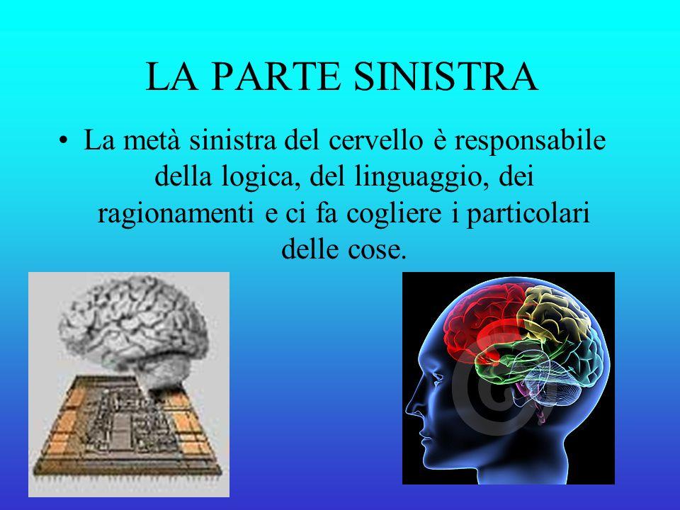 LA PARTE SINISTRA La metà sinistra del cervello è responsabile della logica, del linguaggio, dei ragionamenti e ci fa cogliere i particolari delle cose.