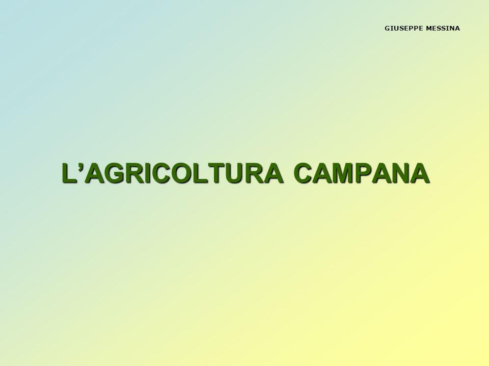 GIUSEPPE MESSINA LA VOCAZIONE PRODUTTIVA DEL SETTORE AGRICOLO CAMPANO E QUELLA TIPICA DI UN SISTEMA AD AVANZATO LIVELLO DI SPECIALIZZAZIONE PRODUTTIVA -MODELLO DI AGRICOLTURA INTENSIVA -ELEVATA PRODUTTIVITA DELLA TERRA IN TERMINI DI VALORE AGGIUNTO PER ETTARO DI SAU CON APPENA IL 4,4% DELLA SAU ESSA PRODUCE UNA PLV PARI AL 7,5% DI QUELLA NAZIONALE, PER UN AMMONTARE PROSSIMO AI 3 MILIARDI DI EURO