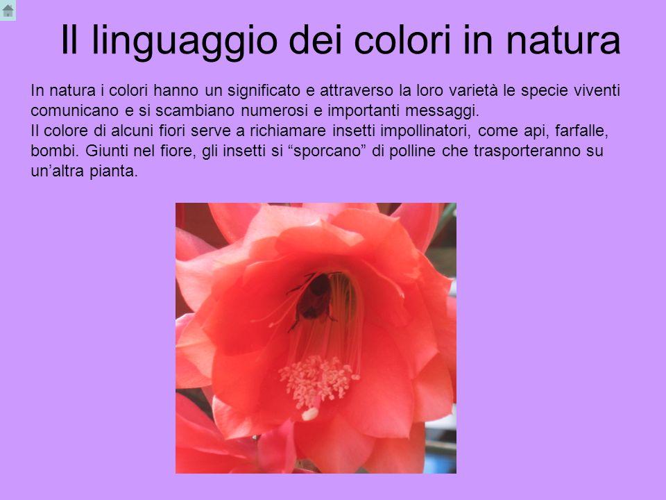 Il linguaggio dei colori in natura In natura i colori hanno un significato e attraverso la loro varietà le specie viventi comunicano e si scambiano nu