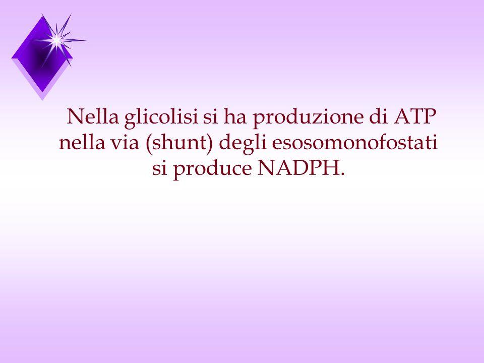 Nella glicolisi si ha produzione di ATP nella via (shunt) degli esosomonofostati si produce NADPH.
