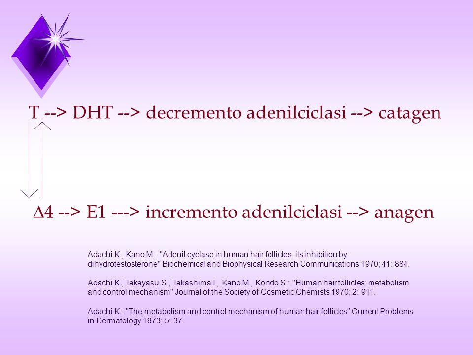T --> DHT --> decremento adenilciclasi --> catagen 4 --> E1 ---> incremento adenilciclasi --> anagen Adachi K., Kano M.: