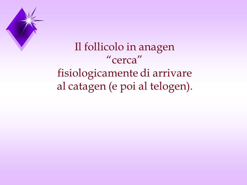 Il follicolo in anagen cerca fisiologicamente di arrivare al catagen (e poi al telogen).