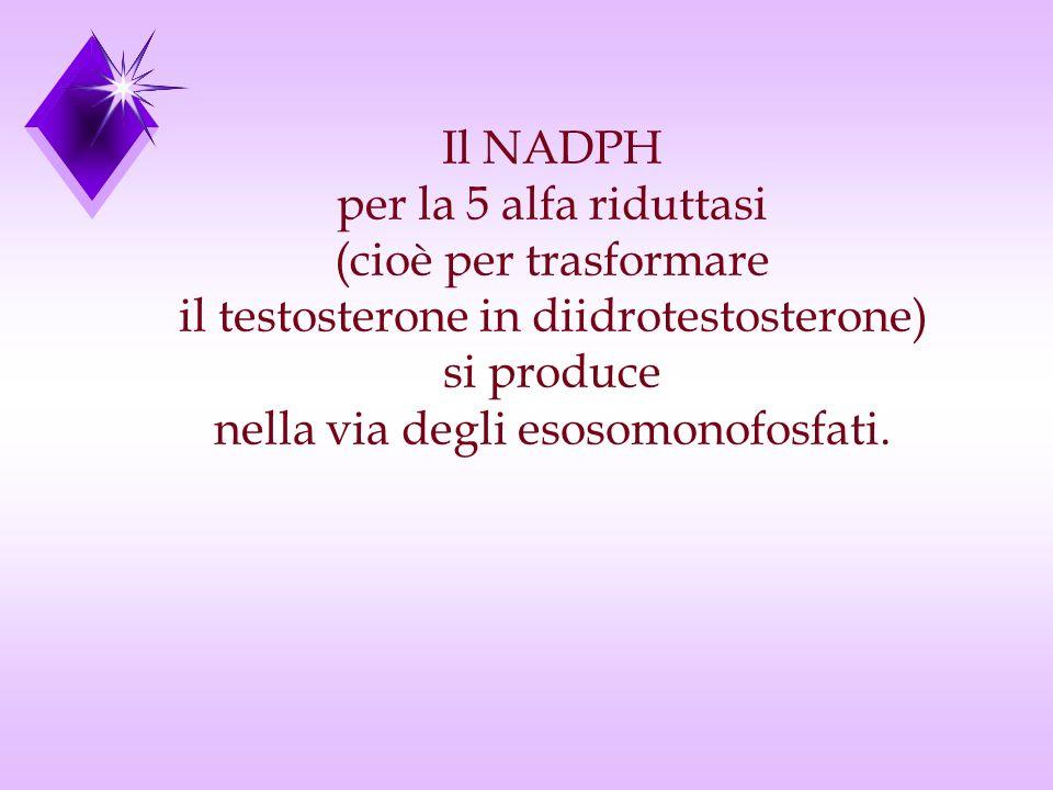 Il NADPH per la 5 alfa riduttasi (cioè per trasformare il testosterone in diidrotestosterone) si produce nella via degli esosomonofosfati.