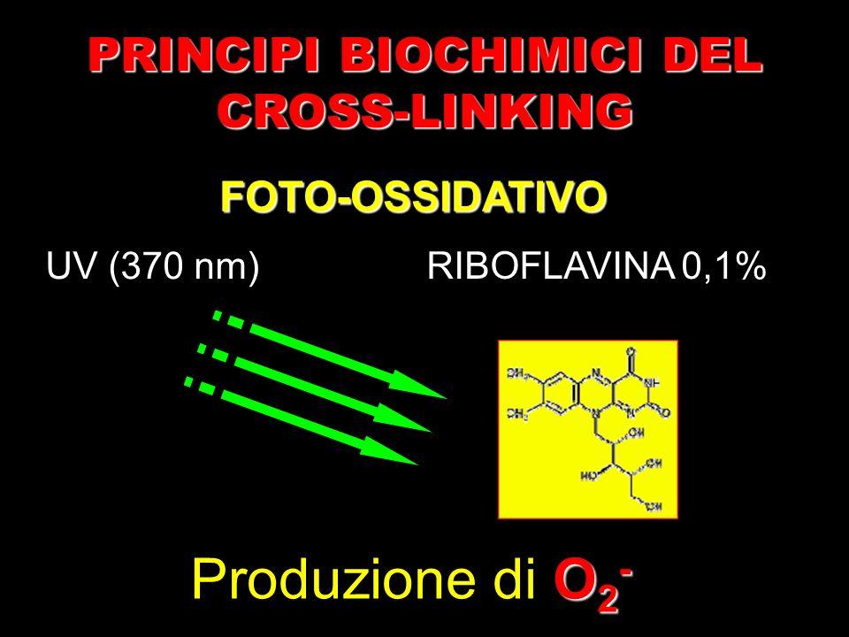 UV (370 nm) PRINCIPI BIOCHIMICI DEL CROSS-LINKING O 2 - Produzione di O 2 - RIBOFLAVINA 0,1% FOTO-OSSIDATIVO