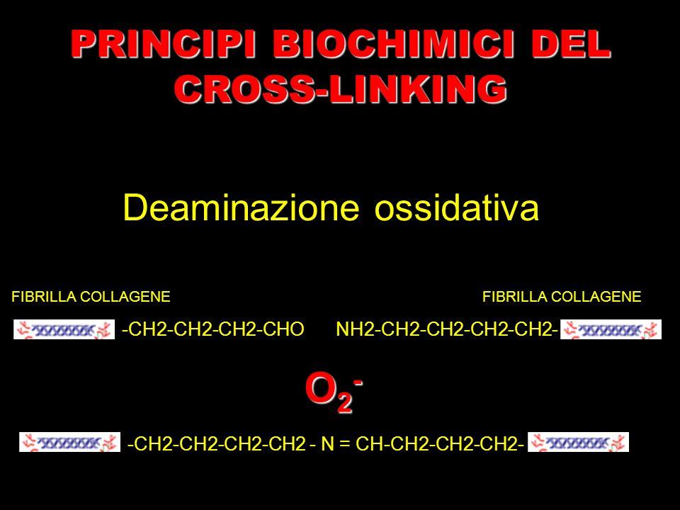 FIBRILLA COLLAGENE -CH2-CH2-CH2-CHONH2-CH2-CH2-CH2-CH2- -CH2-CH2-CH2-CH2 - N = CH-CH2-CH2-CH2- O2-O2-O2-O2- Deaminazione ossidativa PRINCIPI BIOCHIMIC