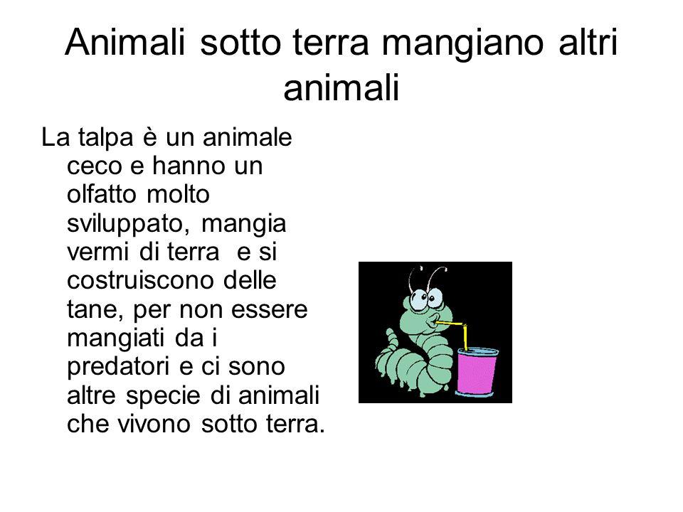 Animali sotto terra mangiano altri animali La talpa è un animale ceco e hanno un olfatto molto sviluppato, mangia vermi di terra e si costruiscono del