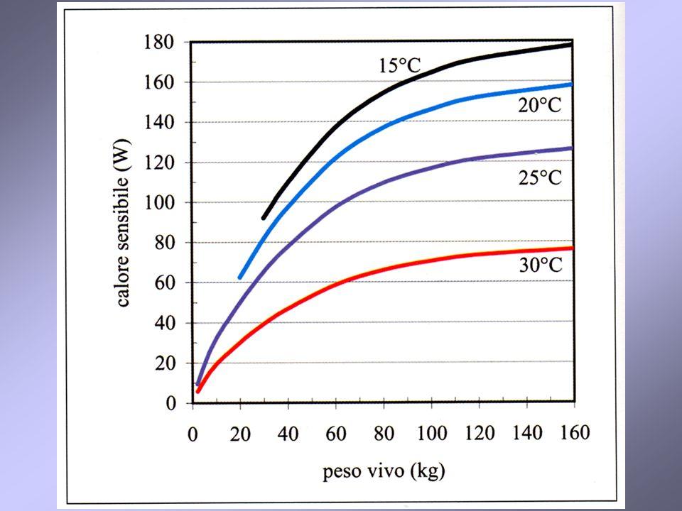 55 Ricerca della temperatura di equilibrio