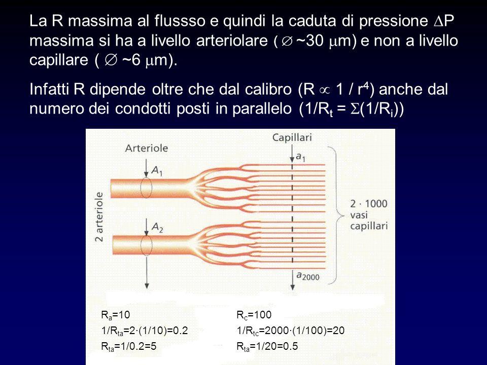 La R massima al flussso e quindi la caduta di pressione P massima si ha a livello arteriolare ( ~30 m) e non a livello capillare ( ~6 m). Infatti R di