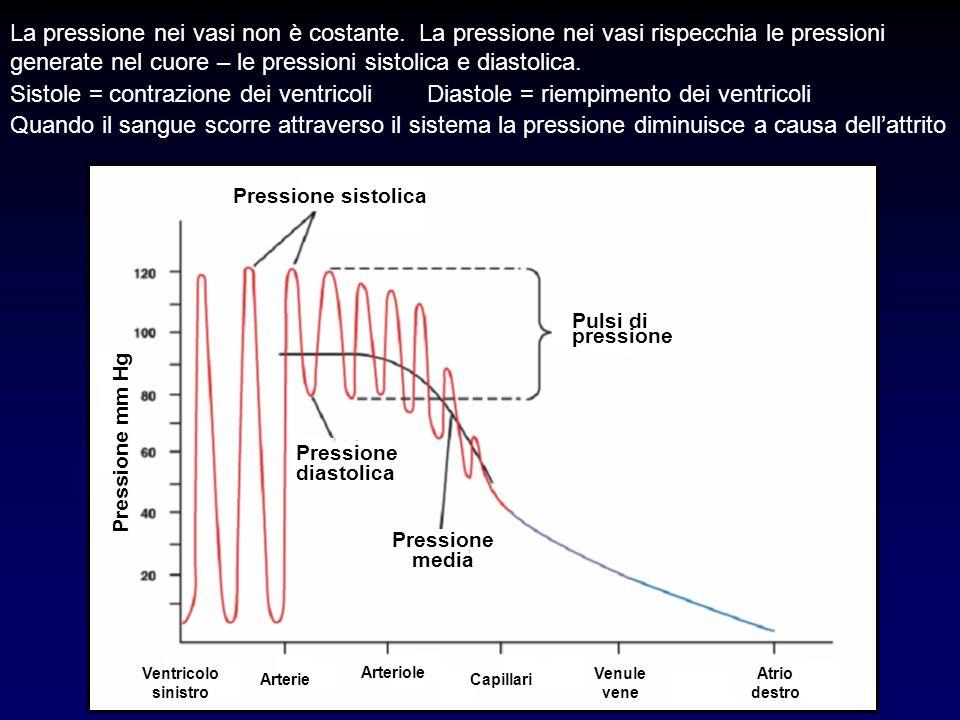 Pressione mm Hg Pressione sistolica Pressione diastolica Pressione media Pulsi di pressione Capillari Arteriole Arterie Venule vene Ventricolo sinistr
