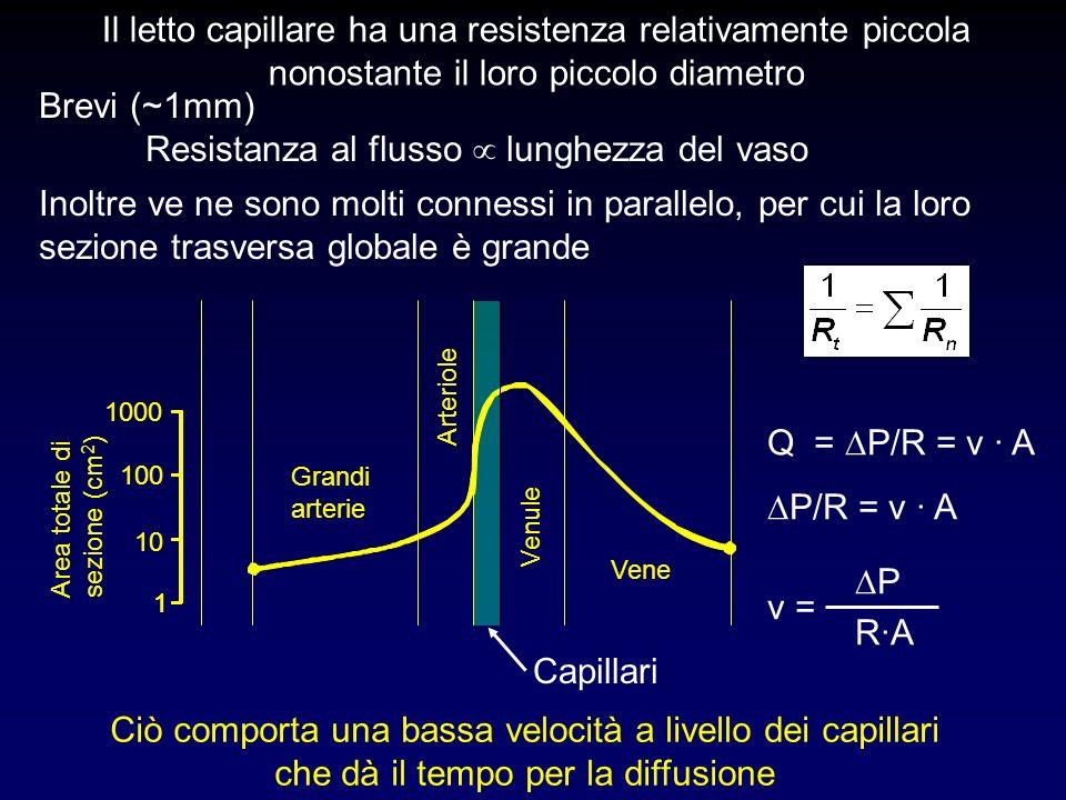 Il letto capillare ha una resistenza relativamente piccola nonostante il loro piccolo diametro Brevi (~1mm) Resistanza al flusso lunghezza del vaso In