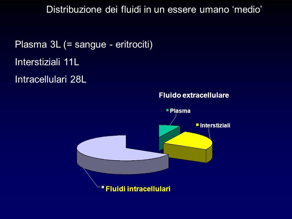 Fluido extracellulare Plasma 3L (= sangue - eritrociti) Interstiziali 11L Intracellulari 28L Distribuzione dei fluidi in un essere umano medio Interst