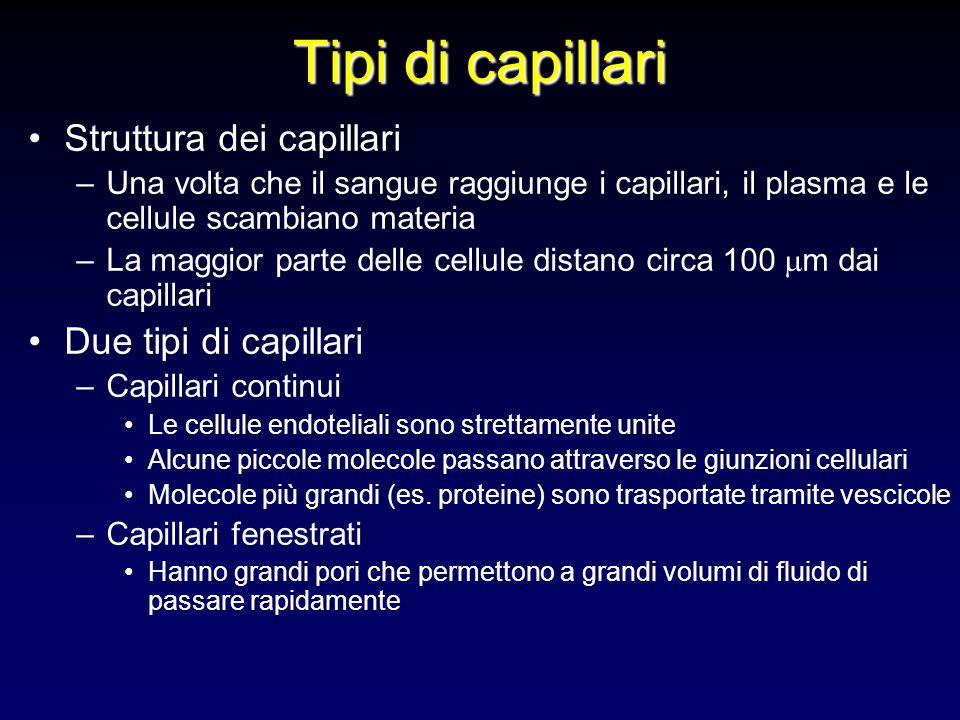 Tipi di capillari Struttura dei capillari –Una volta che il sangue raggiunge i capillari, il plasma e le cellule scambiano materia –La maggior parte d