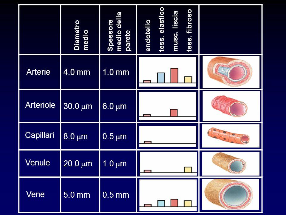 4.0 mm1.0 mm 30.0 m6.0 m 8.0 m0.5 m 20.0 m1.0 m 5.0 mm0.5 mm Arterie Arteriole Capillari Venule Vene Diametro medio Spessore medio della parete endote