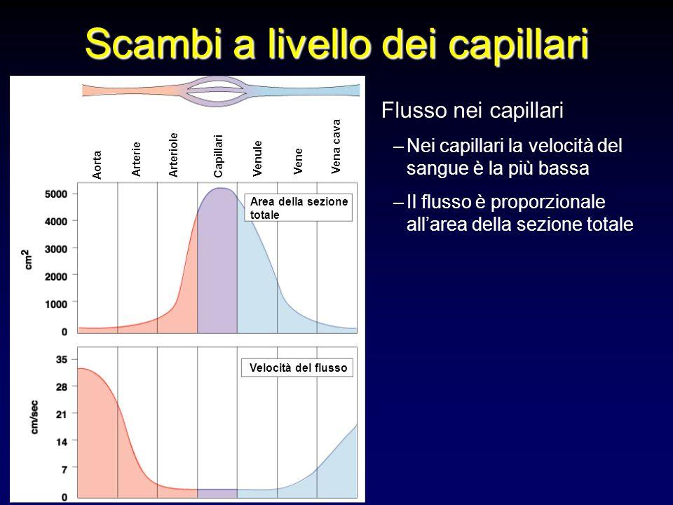 Flusso nei capillari –Nei capillari la velocità del sangue è la più bassa –Il flusso è proporzionale allarea della sezione totale Scambi a livello dei