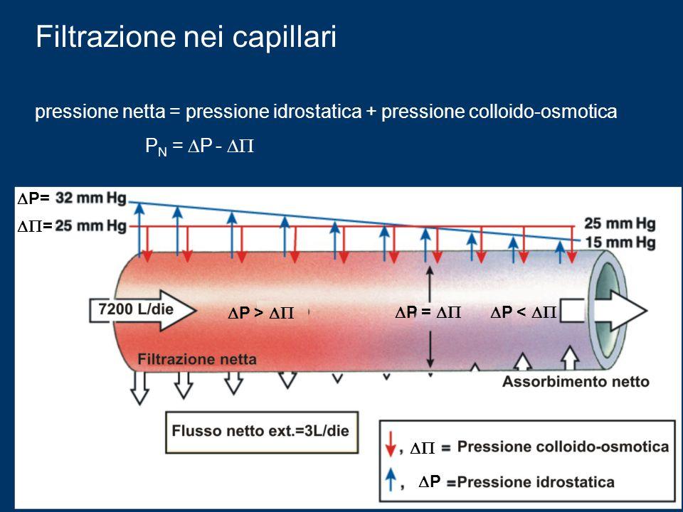Filtrazione nei capillari pressione netta = pressione idrostatica + pressione colloido-osmotica P N = P - P= = P P > P = P <
