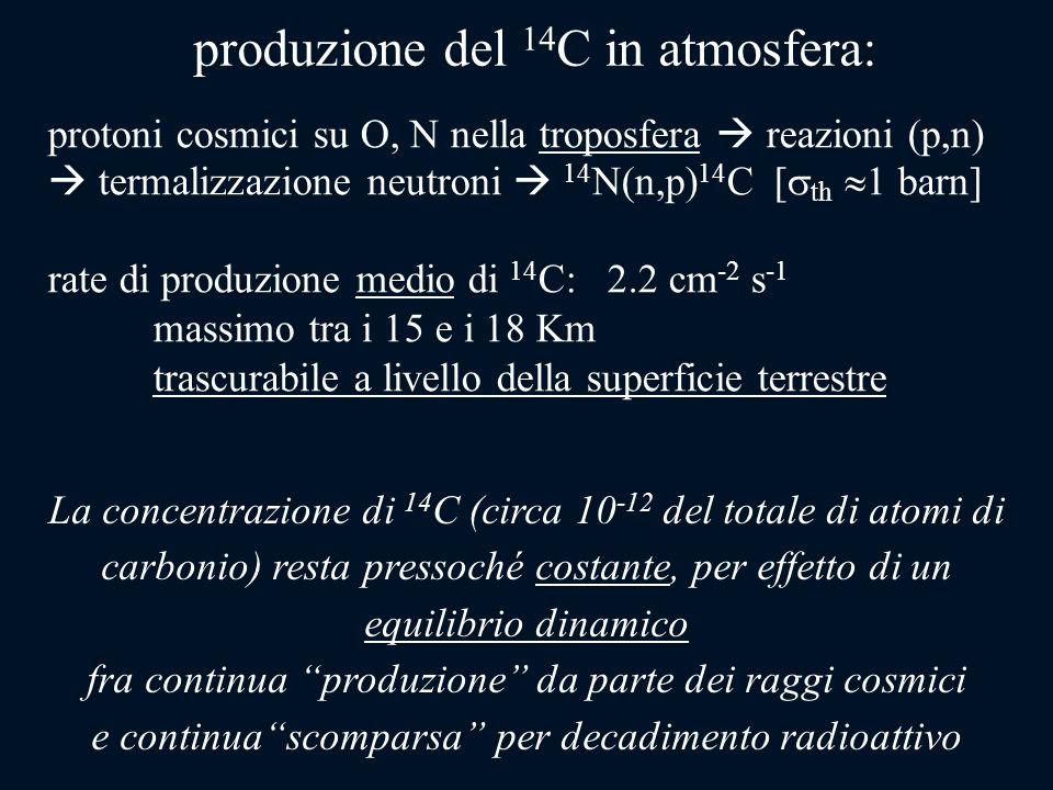 La concentrazione di 14 C (circa 10 -12 del totale di atomi di carbonio) resta pressoché costante, per effetto di un equilibrio dinamico fra continua