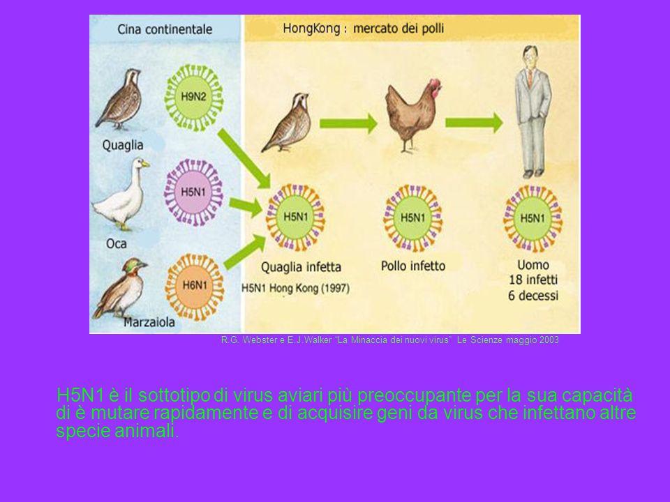 H5N1 è il sottotipo di virus aviari più preoccupante per la sua capacità di è mutare rapidamente e di acquisire geni da virus che infettano altre spec
