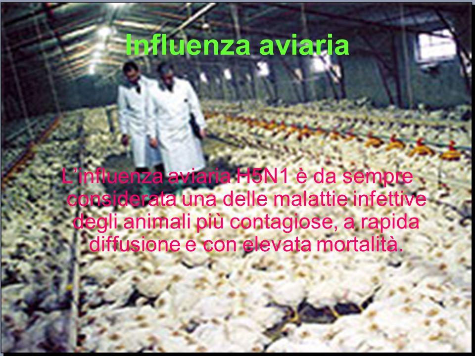 Influenza aviaria Linfluenza aviaria H5N1 è da sempre considerata una delle malattie infettive degli animali più contagiose, a rapida diffusione e con
