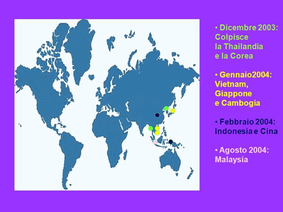 Dicembre 2003: Colpisce la Thailandia e la Corea Gennaio2004: Vietnam, Giappone e Cambogia Febbraio 2004: Indonesia e Cina Agosto 2004: Malaysia