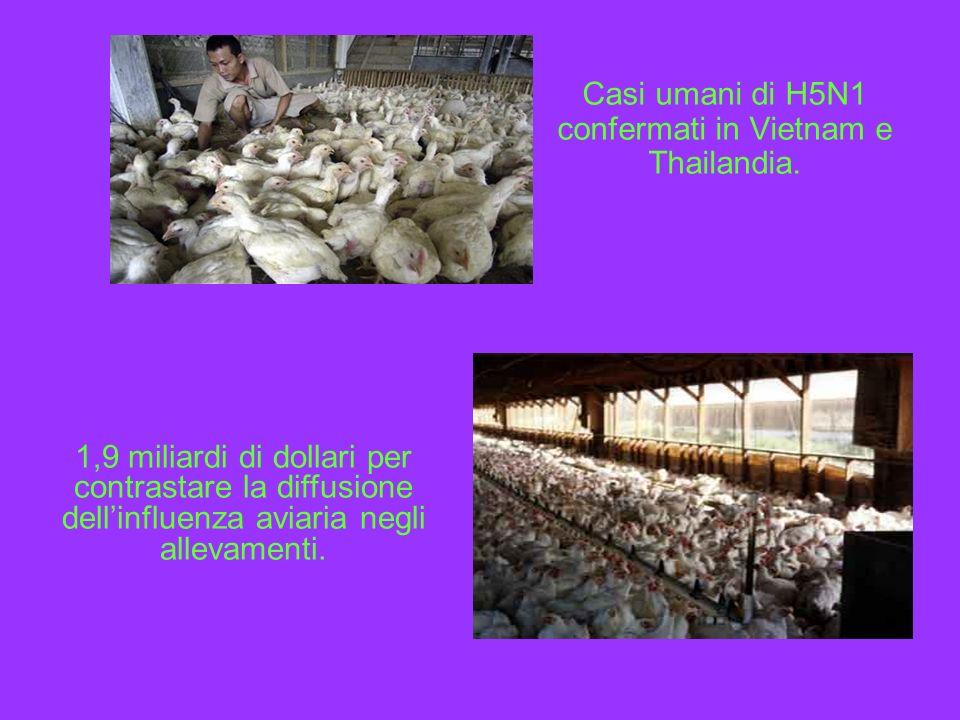 Casi umani di H5N1 confermati in Vietnam e Thailandia. 1,9 miliardi di dollari per contrastare la diffusione dellinfluenza aviaria negli allevamenti.