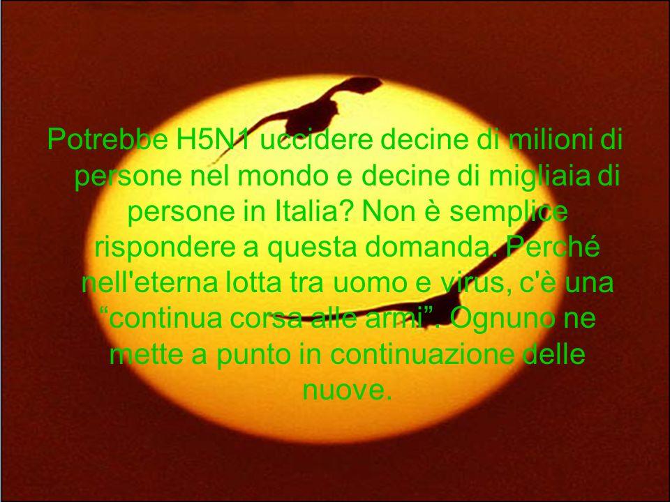 Potrebbe H5N1 uccidere decine di milioni di persone nel mondo e decine di migliaia di persone in Italia? Non è semplice rispondere a questa domanda. P