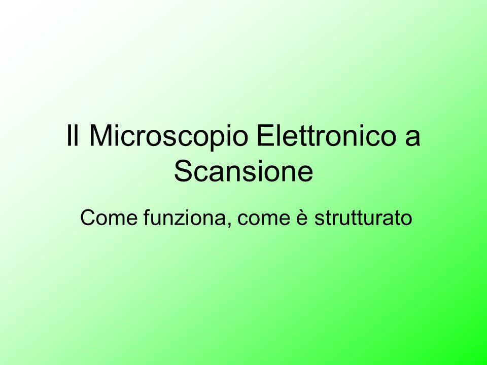 Il Microscopio Elettronico a Scansione Come funziona, come è strutturato