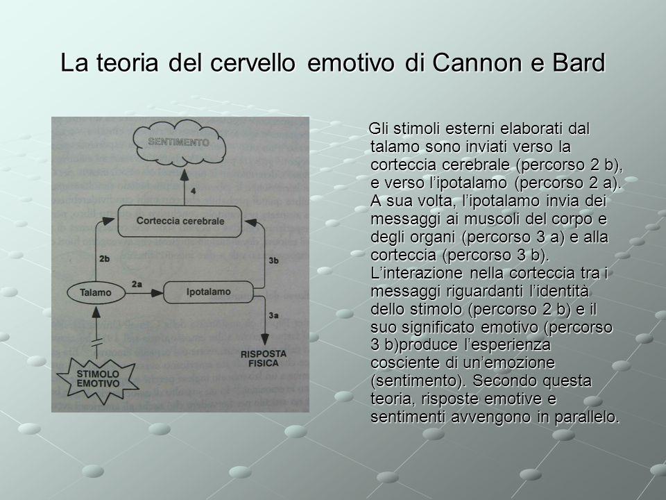 La teoria del cervello emotivo di Cannon e Bard Gli stimoli esterni elaborati dal talamo sono inviati verso la corteccia cerebrale (percorso 2 b), e v