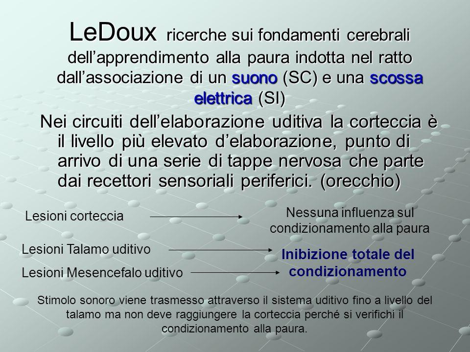 LeDoux ricerche sui fondamenti cerebrali dellapprendimento alla paura indotta nel ratto dallassociazione di un suono (SC) e una scossa elettrica (SI)