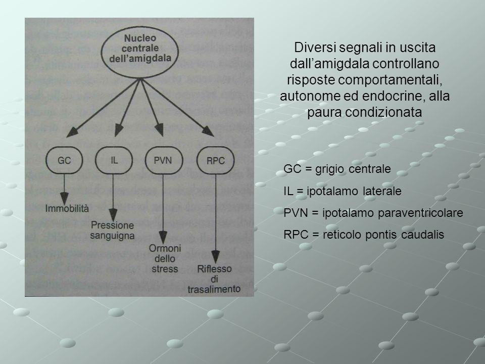 Diversi segnali in uscita dallamigdala controllano risposte comportamentali, autonome ed endocrine, alla paura condizionata GC = grigio centrale IL =