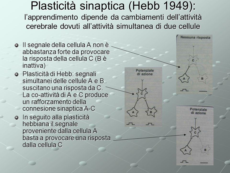 Plasticità sinaptica (Hebb 1949): lapprendimento dipende da cambiamenti dellattività cerebrale dovuti allattività simultanea di due cellule Il segnale