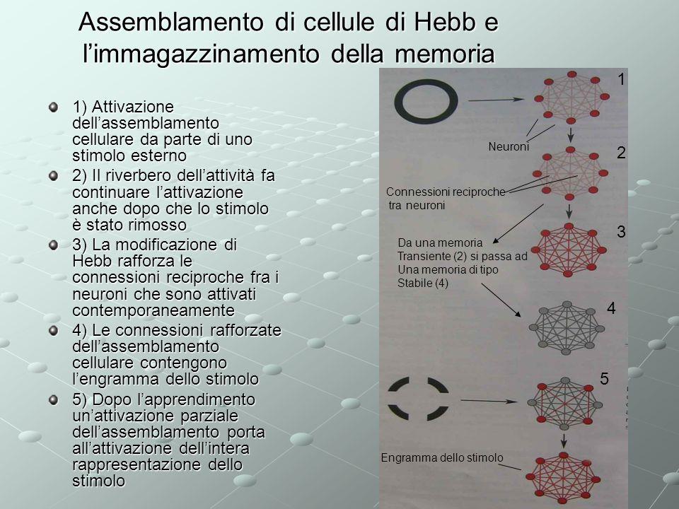 Assemblamento di cellule di Hebb e limmagazzinamento della memoria 1) Attivazione dellassemblamento cellulare da parte di uno stimolo esterno 2) Il ri