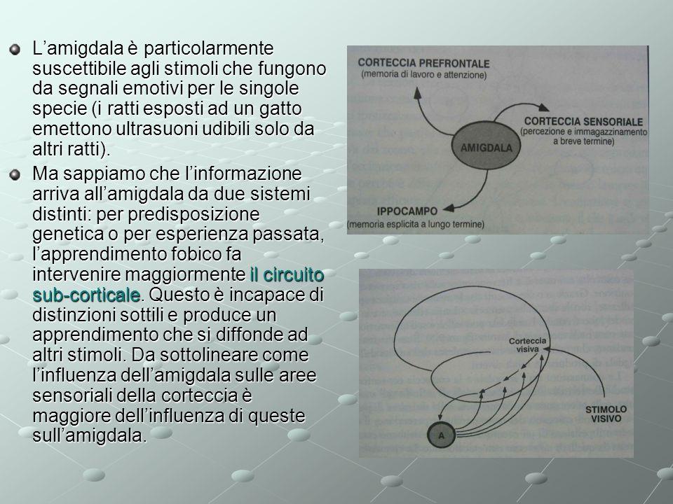 Lamigdala è particolarmente suscettibile agli stimoli che fungono da segnali emotivi per le singole specie (i ratti esposti ad un gatto emettono ultra